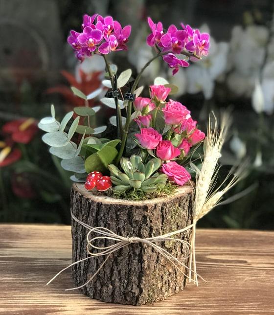 kütük saksıda butik çiçek