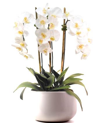 Orkide Gönder
